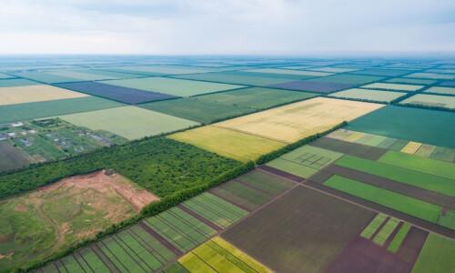 Сколько будет стоить 1 гектар земли