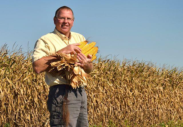Новый рекорд урожайности кукурузы - 386 центнеров с гектара!