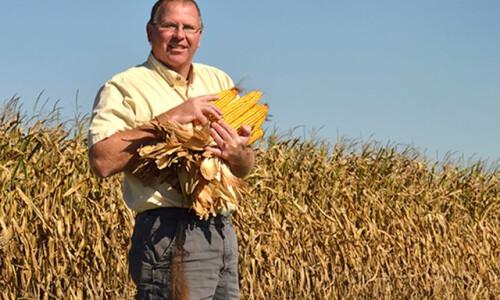 Новий рекорд урожайності кукурудзи - 386 центнерів з гектара!