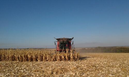Как правильно настраивать жатки для кукурузы